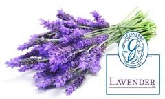 Lavanda GreenLeaf